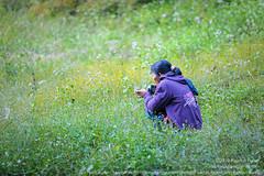 ช่างภาพในทุ่งดอกไม้ป่า