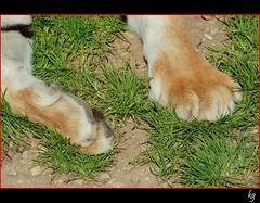 Los Cinco Sentidos - Tacto (kgorka) Tags: animal canon is felino kata eos350d tigre uas cabarceno cantabrica 100400 tacto gorkabarreras