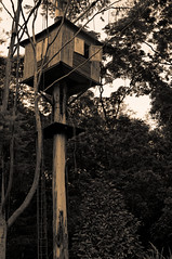 Casa da rvore (Daniel Pascoal) Tags: sofranciscoxavier sfx danielpg