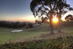 Caught in the Crowd (WilliamBullimore) Tags: trees sky sun sunlight field grass sunrise dawn pond farm au australia victoria farmland flare hdr hdri gippsland supershot canonef1635mmf28liiusm canonrc1wirelessremote manfrotto190xbtripod canoneos5dmarkii manfrotto322rc2heavydutygripballhead