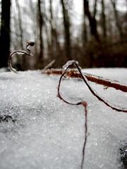 (Jocassee) Tags: road trees snow ice leaves outside icestorm greer clotheline greersc icesickles