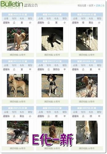 「今天最白爛」台南市動物防疫所e化,推出「上網認養查詢服務」歡迎參觀認養,20100201