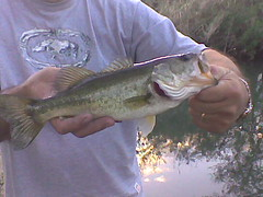 fishing bass largemouth brackenridge sanantonioriver largemouthbass brackenridgepark