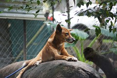"""maybe the dingo ... (Photo.Phinish) Tags: sony australia a500"