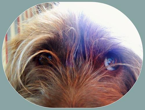 Cocoa's Eyes