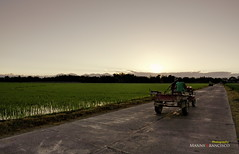 Ricefields in the Morning (mannyfrancisco) Tags: tree tricycle philippines talavera ricefields pinoy sunriseshoot nuevaecija handtractor ricegranary philippinecarabao canon450d dimasalang earthasia dimasalangsur dimasalangnorte irrigationcontrolsystem morninginnuevaecija