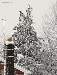 Snow Storm Feb 2010 (#4)