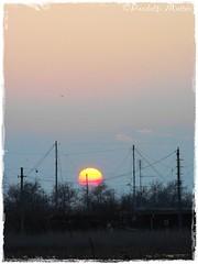 """Alle 5 della sera (Matteo """"panda"""") Tags: sunset sky sun panda tramonto natura cielo fujifilm sole terra aria romagna comacchio vallidicomacchio portocorsini fujifinepixs1000fd matteopandolfi"""