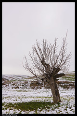 (Antonio Carrillo (Ancalop)) Tags: trees winter españa snow tree nature canon landscape arbol spain nieve paisaje tokina murcia 1224mm caravaca caravacadelacruz canon450d ancalop