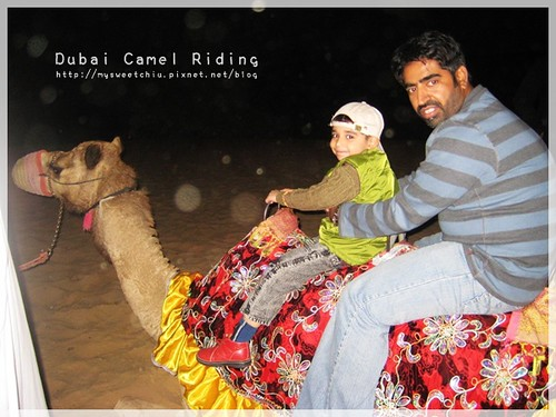 Dubai Camel Riding 3 杜拜沙漠衝沙騎駱駝