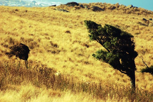lyttelton trees