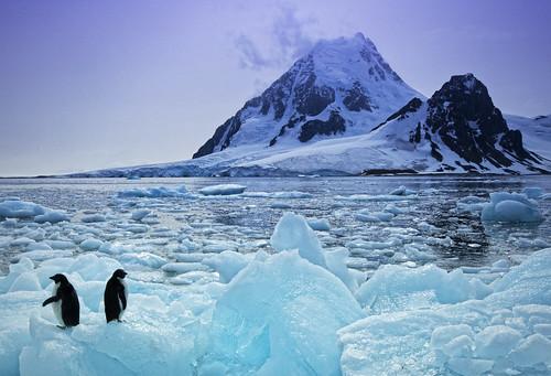 penguins in antarctica. Two Penguins in Antarctica
