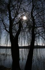 Alberi d'inverno sul lago - Winter trees on the lake (Bluesky71) Tags: trees alberi fiatlux schiranna lagodivarese rubyphotographer