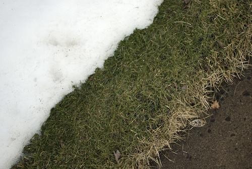 201 green grass