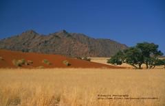 Sesriem, Elim Dune (blauepics) Tags: africa nature landscape sand desert natur afrika gras landschaft namibia dne wste visipix