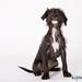puppy_M_Kloth-002