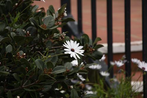Blooms, Presidio Park, San Diego, CA