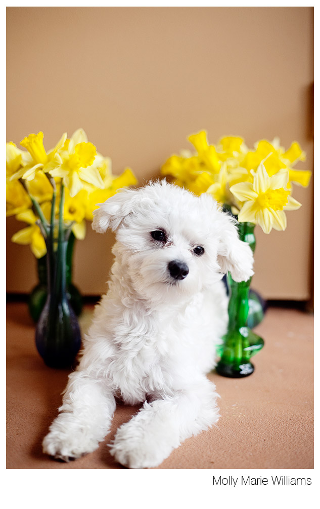 Molly Marie Williams Photography: The Cutest Dog in the ...