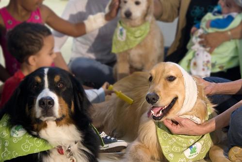 Alina (Bernese Mountain Dog), Namour (Golden Retriever) e , durante visita à enfermaria pediátrica Instituto Dante Pazzanese. Os cães acalmam, tranquilizam e alegram crianças e adultos, otimizando sua recuperação.