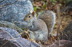 Where's My Nuts?