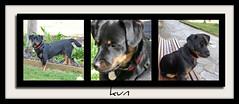 Collage de kun (mukotxa) Tags: dog pet animal puppy can perro cachorro mascota kun