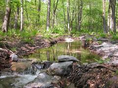 wheeler creek on broad mountain (madmax139) Tags: scenery jonestown coal coalmining schuylkillcounty minersville