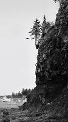 BRINK OF EXISTANCE (ADuffett) Tags: tree rockface shore hanging fundy