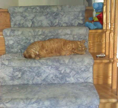 Houdini On the Stairs