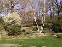 Zen Garden (andyXchrist) Tags: nature spring outdoor bronx rockgarden nybg whitebirch zn5