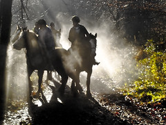 Horses clouded in sweat (SEOconsultantz.com) Tags: wood uk trees winter light england horses horse cloud sun mist animal outdoors photography nokia photo woods glow outdoor stokeontrent staffordshire hanchurch