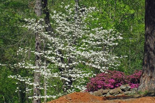 Spring In Mena 3