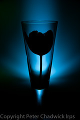 Tulip_silhouette (PeterChad) Tags: lighting blue light flower nature glass bulb canon table stem top birth creative gift tulip mk2 5d silhoutte tabletop reborn lightroom