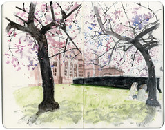 Cherry Blossoms in Kelvingrove (Wil Freeborn) Tags: trees moleskine museum cherry sketch blossom journal sakura kelvingrove