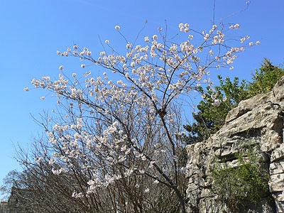 printemps à Montmartre.jpg