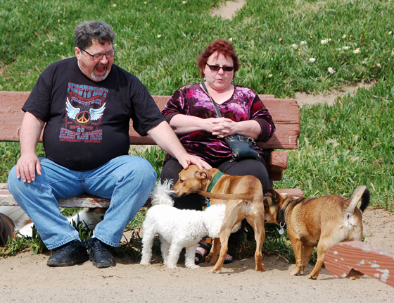 7dog-people.jpg
