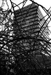 Constrained (richard314159) Tags: blackandwhite film canon kodak photograph 135 40mm coventry canonet ql17 giii xtol f17 adox ortho25 richard314159 bfm0410 20100415acanonetbfm0410bog