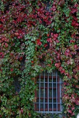 Window of Opportunity!!! (Arabesque20) Tags: blue autumn red opportunity brown green fall window nature colors leaves reflections seasons natural wine vine winery change winemaking windowofopportunity sooc