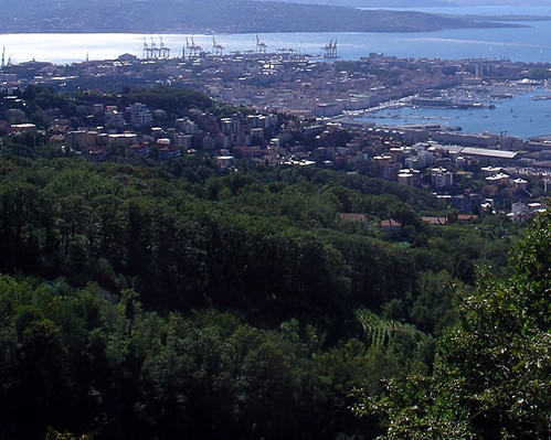 Vineyards in the hills of Trieste