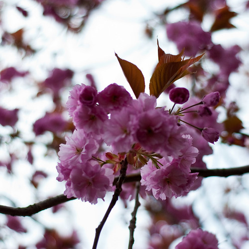 010510_ Blossom #3