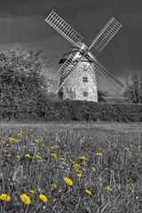 Stembridge Tower Mill B&W (stagenutuk) Tags: flowers windmill field d50 nikon sails somerset nationaltrust dandelions stembridgetowermill