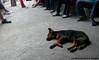 Mahabang Usapan (fillrbunny) Tags: dog feet kankanaey