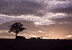 Madagascar sunset (rackyross) Tags: africa sunset naturaleza nature atardecer countryside tramonto grandmother natura campagna campo fields afrika madagascar puestadelsol coucherdusoleil campiña ambalavao 非洲 bigmomma 马达加斯加 אפריקה gamewinner アフリカ madagasikara 아프리카 آفریقا ltytrx5 افريقيا flickrchallengegroup flickrchallengewinner מדגסקר африка أفريقيا αφρική 마다가스카르 мадагаскар مدغشقر मेडागास्कर マダガスカル আফ্ৰিকা مڈغاسکر மடகாசுகர் مادغاسکر ಮಡಗಾಸ್ಕರ್ мадағасқар ماداگاسکار މަޑަގަސްކަރަ মাদাগাস্কার આફ્રિકા अफ़्रीका աֆրիկա ອາຟຣິກກາ ആഫ്രിക്ക ஆப்பிரிக்கா африк ประเทศมาดากัสการ์ మడగాస్కర్ मडगास्कर მადაგასკარი մադագասկար مادجاسكار আফ্রিকা აფრიკა ಆಫ್ರಿಕಾ आफ्रिका افریقہ anymedal1020faves