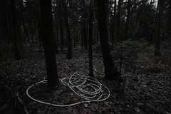 (Serge!!) Tags: wood autumn light shadow mist abstract tree art nature vertical night contrast forest dark landscape fantastic alone branch loneliness darkness empty dream deep atmosphere cable dirty dirt cover shade catch after mystical inside concept atmospheric neutral afterthought jumpaper