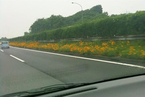 中央分離帯に菜の花?殺風景な高速道路の景色で目をひく。