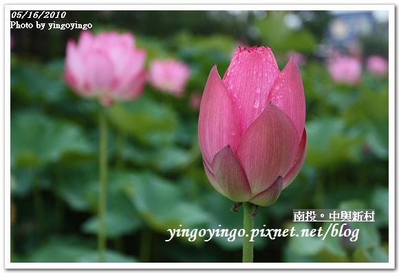中興新村99年蓮花I2155