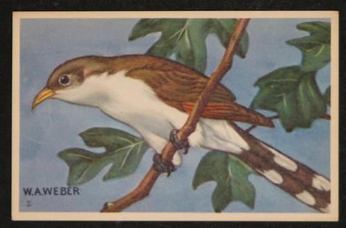 vintage birds 003