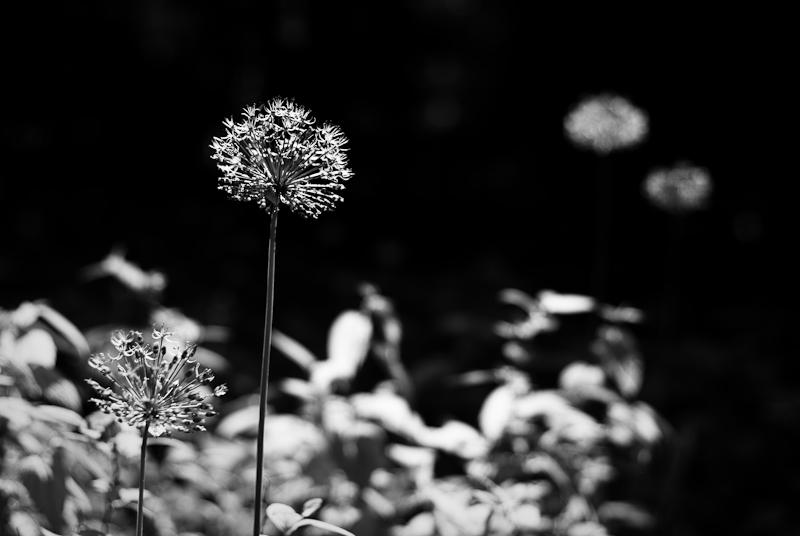 Spring in Botanic garden #47.1