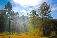 Clearing (fullpressink) Tags: park morning trees mist fog oakland haze hills eastbay redwood rays diffusion regional ebrpd eastbayregionalparkdistrict ebparks ebparksok
