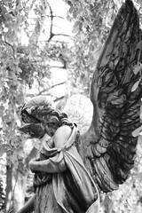 Never lose face... (michael_hamburg69) Tags: bw friedhof face cemetery angel germany deutschland wings gesicht reparatur defekt hamburg engel frau figur kaputt elbchaussee 1814 flgel geflgel weiblich abgebrochen zahnderzeit nienstedten loseface gesichtverlieren nienstedtenerfriedhof reparaturbedrftig