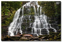 Nelson Falls (Darkelf Photography) Tags: longexposure rain forest canon landscape photography rainforest tripod australia nelson falls filter waterfalls tasmania 2008 maciek nelsonfalls polariser darkelf 24105mm 400d gornisiewicz